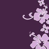 Purple hibiscus. Purple and lavender hibiscus background Stock Images