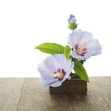 Purple hibiscus flowers ikebana Royalty Free Stock Photos