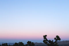 Purple Hues on Sunset at Joshua Tree National Park. Sunset pastel colours at Joshua Tree National Park. The Yucca Brevifolia are silhouetted in the low light Royalty Free Stock Photography