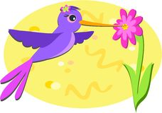 Purple Hummingbird and Pink Flower Royalty Free Stock Photo