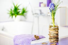 Purple hyacinth decoratively arranged in the bathroom.  Stock Images