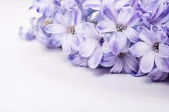 Purple hyacinth flowers Stock Image
