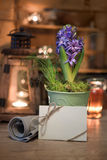 Purple hyacinth and greeting card on winter kitchen Royalty Free Stock Photo