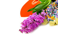 Purple hyacinth isolated on white Stock Images