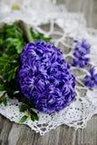 Purple hyacinth Royalty Free Stock Photos