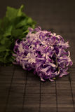 Purple Hyacinthus Royalty Free Stock Photos