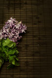 Purple Hyacinthus Stock Image