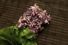 Purple Hyacinthus Royalty Free Stock Image