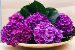 Purple Hydrangea flower on plate. Purple Hydrangea flower on wooden plate Royalty Free Stock Image
