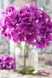 Purple hydrangea flowers Stock Photography