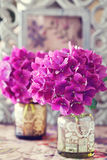 Purple hydrangea flowers Stock Photography