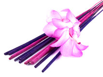 Purple incense and pink cactus flower Royalty Free Stock Images