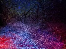 Mystical indigo and purple forest, photographed in South Africa