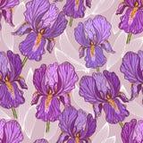 Purple Iris. Hand drawn illustration of a purple iris Royalty Free Stock Photos
