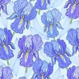 Purple Iris. Seamless pattern with a hand drawn blue iris Stock Photo