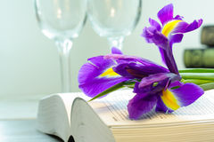 Purple iris on the book Stock Image