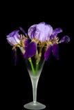 Purple iris bouquet in stemware Royalty Free Stock Photo