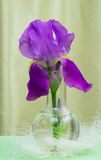 Purple iris chemical in glass container Royalty Free Stock Photography