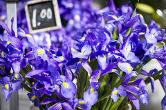 Purple Iris. Cut purple iris at a farmer's market. Price sign (1.00) out of focus in the background Stock Photography