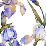 Purple iris floral botanical flower. Watercolor background illustration set. Frame border ornament square. Purple iris floral botanical flower. Wild spring leaf royalty free illustration