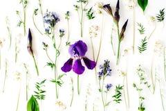 Purple iris flower on white background Stock Image