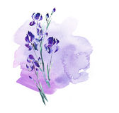 Purple  iris flowers on lilac background. Royalty Free Stock Photography