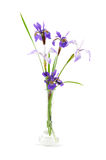 Purple iris flowers in a small glass vase Stock Image