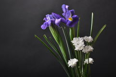 Purple irises on a black background. And white chrysanthemums Stock Photo