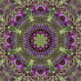 Purple Ironweed Kaleidoscope - Vernonia gigantea Royalty Free Stock Images