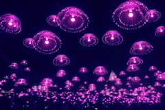 Purple jellyfish lights shine in the night sky. Luminescent fibre lighting Royalty Free Stock Images