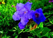 Purple jungle flower Stock Photography