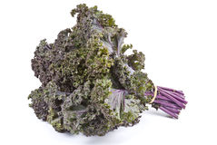 Purple Kale royalty free stock photography