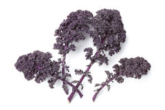 Purple kale leaves Royalty Free Stock Photos
