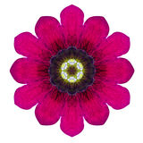 Purple Kaleidoscopic Flower Mandala Isolated on White Stock Image