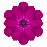 Purple Kaleidoscopic Primrose Flower Mandala Isolated on White Stock Photography