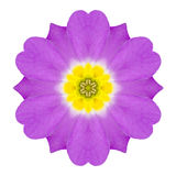 Purple Kaleidoscopic Primrose Flower Mandala Isolated on White Stock Image