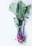 Purple kohlrabi Stock Image
