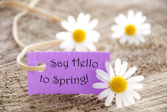 Purple Label With Life Quote Say Hello To Spring And Marguerite Blossoms. Purpel Label With White Ribbon And English Life Quote Say Hello To Spring With Three Royalty Free Stock Photos