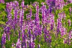 Purple landscape Stock Image