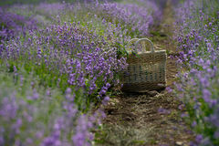 Purple landscape Royalty Free Stock Photography