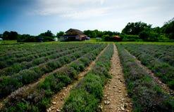 Purple landscape Stock Images