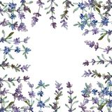 Purple lavender floral botanical flower. Watercolor background illustration set. Frame border ornament square. Purple lavender floral botanical flower. Wild stock photo