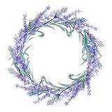 Purple lavender. Floral botanical flower. Wild spring leaf wildflower. Frame border ornament square. stock illustration