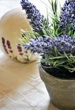 Lavender in pots Stock Images