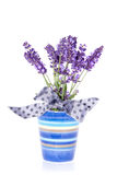 Purple lavender flowers Stock Images
