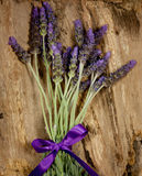 Purple lavender flowers on bark. A bunch of purple lavender flowers tied with a bow against tree bark Stock Photography