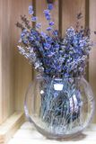 Dried lavender in a glass vase. Purple lavender flowers. Blue dried flowers. Herbarium of delicate flowers. Dry plant. Decorative flowers. Interior decoration royalty free stock photos