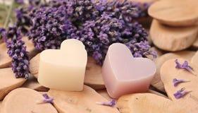 Purple, Lavender, Lilac, Violet stock photos