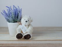 Purple lavender pots and cute teddy bears with greeting cards on Mother`s Day royalty free stock photos