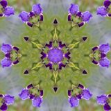 Purple and Lavender Tall Bearded Iris Blossom Kaleidoscope. This is a purple and lavender tall bearded iris blossom with white beards tinged with yellow, called stock photo